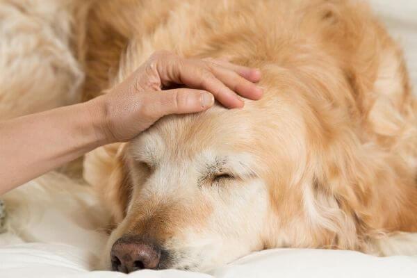 comment rassurer un chien anxieux