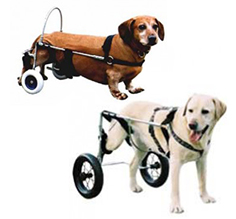 Canis Mobile