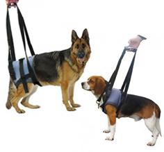 Handy Canis