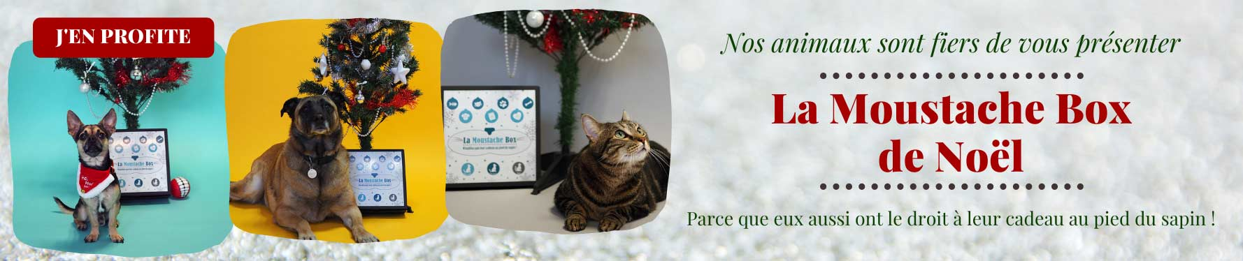 Faites plaisir à votre animal avec la Moustache Box de Noël