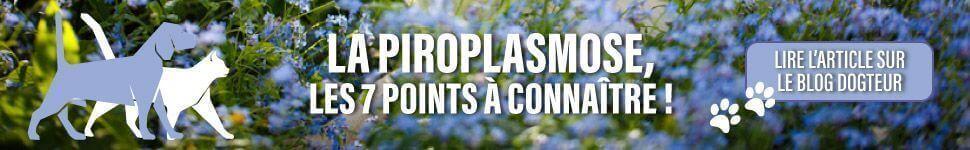 Article blog : La Piroplasmose