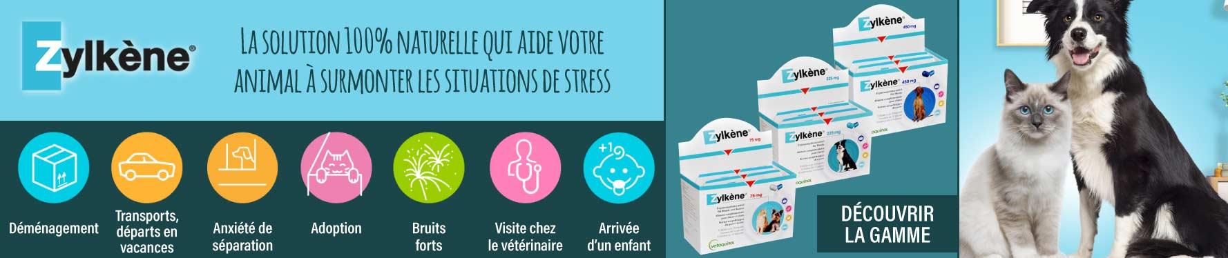 Zylkène contre le stress
