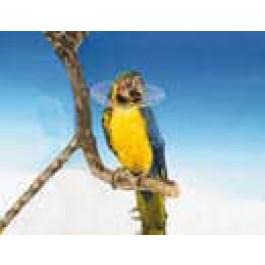 Carcan de protection pour oiseaux - 14 cm - La Compagnie Des Animaux