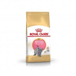Royal Canin Kitten British Shorthair 2 kg - La Compagnie Des Animaux