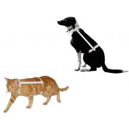 Carcan Propal Grand chat, Schnauzer nain, Jack Russel - T2 20-25 cm  - La Compagnie Des Animaux