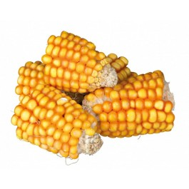 Trixie Pure Nature morceaux d'épis de maïs - La Compagnie des Animaux