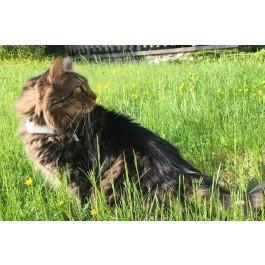 Collier GPS Weenect Cats 2 - La Compagnie Des Animaux