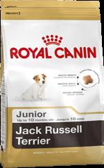 kg Canin Animaux Royal La Russel Junior Compagnie des 3 Jack RdHqdX 1416ab7c887
