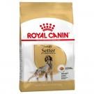 Royal Canin Chien Setter Adult - La Compagnie des Animaux