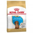 Royal Canin Teckel Junior 1.5 kg - La Compagnie des Animaux