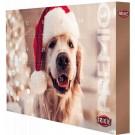 Trixie Calendrier de l'Avent PREMIO pour chien 2019