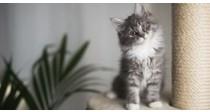 Arbres à Chat et Griffoirs | Comment bien les choisir ?
