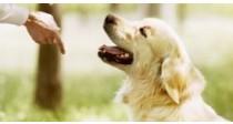 Comment Dresser son Chien | Le Guide | 100% Vétérinaire