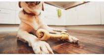 Friandises pour Chien - Comment choisir ses friandises pour chien ?