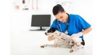 Qu'est-ce que la pyodermite chez le chien ? Comment la soigner ?
