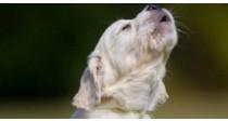 Comment Choisir son Collier de Dressage pour Chien | Guide Vétérinaire