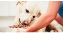 Les Croquettes pour Chien Sans Céréales | Le Guide 100% Véto