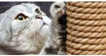 Mon Chat fait ses Griffes sur le Canapé, que faire ? | Guide