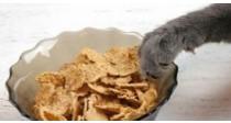 Les Croquettes pour Chat Sans Céréales | Le Guide 100% Véto
