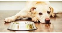 Comment choisir ses croquettes pour chien vétérinaire ?