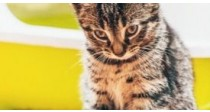 Marquage Urinaire du Chat | Causes & Solutions