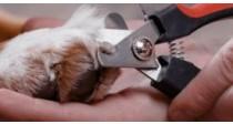 Comment couper les griffes de son chien ?