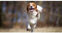 La promenade du chien | Guide 100% Véto