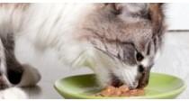 Comment choisir ses Croquettes Bio pour Chat ? | 100% Vétérinaires