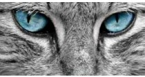 Comment nettoyer les yeux du chat ? | Guide 100% vétérinaire