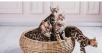 Panier et Chatière pour Chat | Comment bien les choisir ?