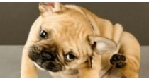 Les antiparasitaires externes pour chien