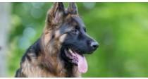 Arthrose du Chien - Comment soulager l'arthrose du chien ?