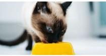 Comment Choisir sa Nourriture Vétérinaire pour Chat ?