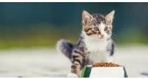 Comment choisir sa nourriture pour chat ? | 100% Vétérinaires