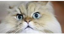 Comment éduquer son chat : Les Miaulements et La Fugue