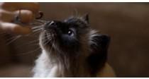 Quelles friandises peut-on donner à son chat ? | 100% Véto