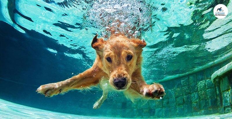 Les risques de la baignade chez le chien