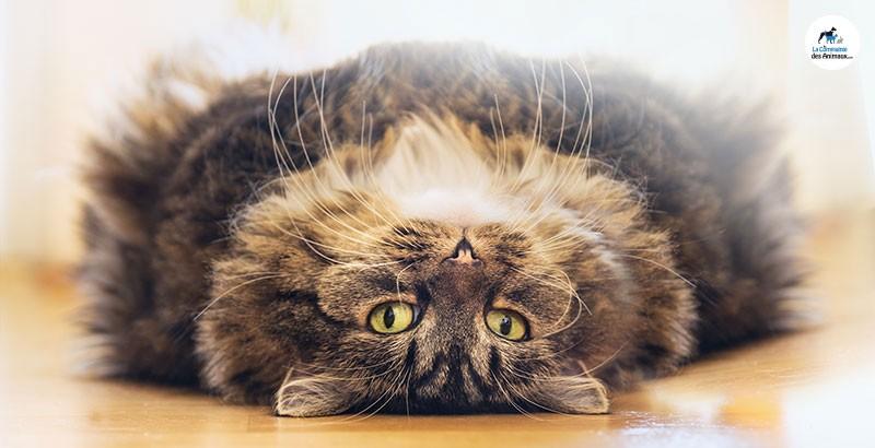 2018 : Objectif perte de poids pour votre chat !