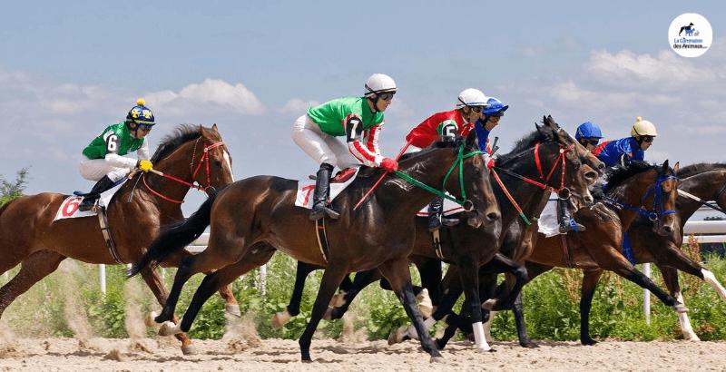 Les électrolytes chez le cheval