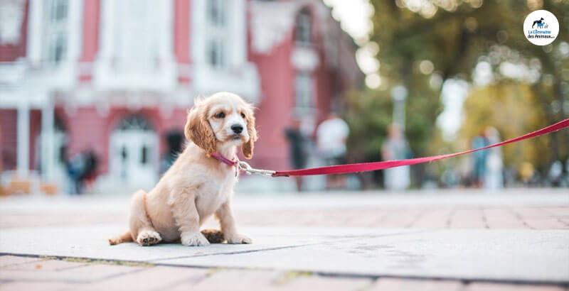 Comment habituer son chiot au collier ?