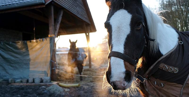 Comment protéger mon cheval du froid ?