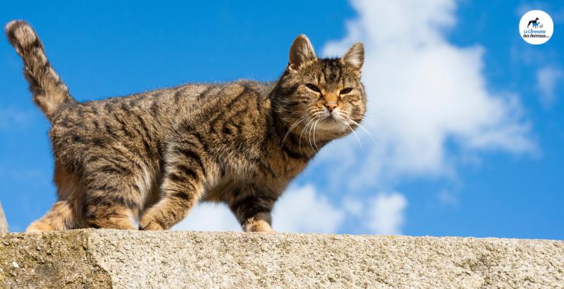 Faut-il donner des vitamines à son chat ?