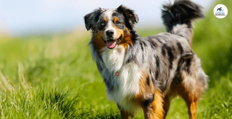 Arthrose : Comment soulager et aider mon chien ?