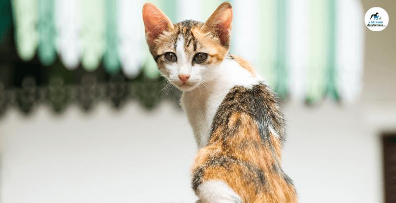 Mon chat est trop maigre: Comment le faire grossir?
