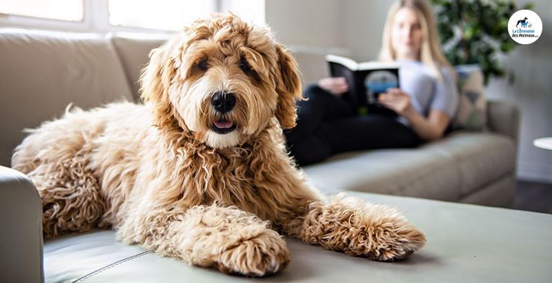 Les jeux d'intelligence pour chien