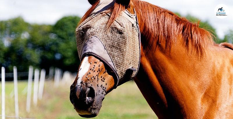 De quels insectes faut-il protéger nos chevaux ?