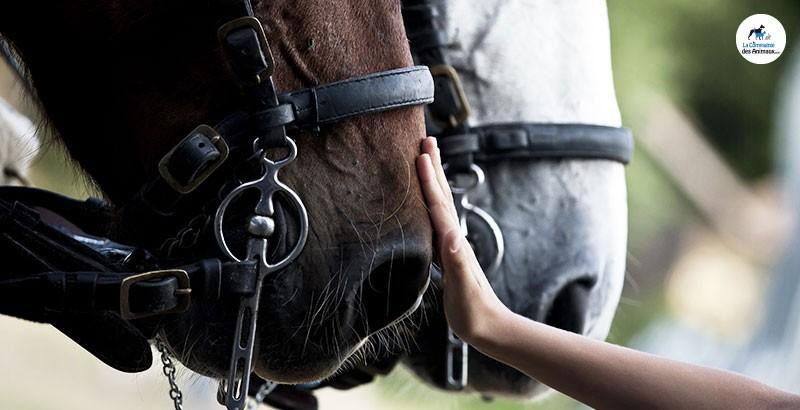 Comment aider votre cheval à mieux respirer ?