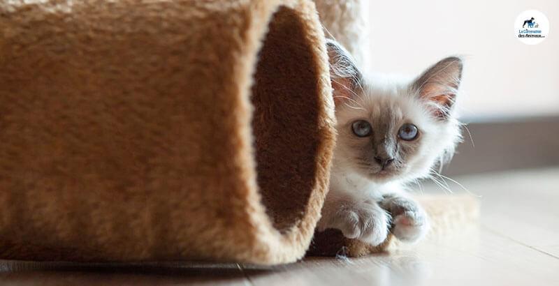 Comment bien choisir un laser pour chat ?