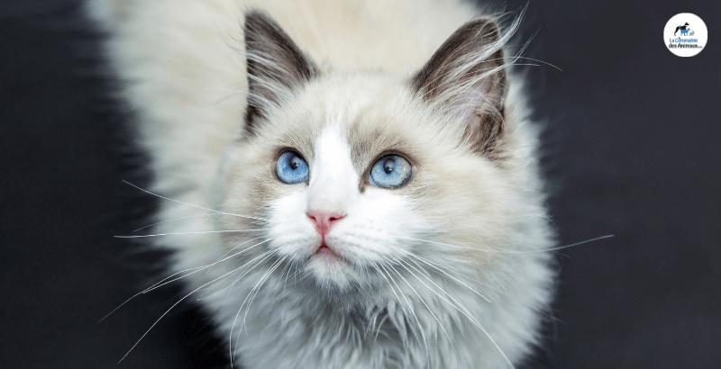 Comment choisir le bon aliment « rénal » pour un chat insuffisant rénal ?