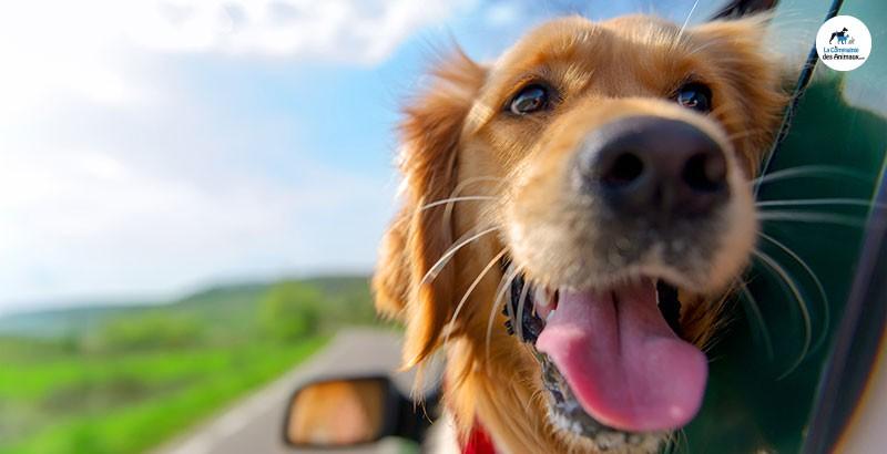 Comment soigner le mal des transport chez son animal ?